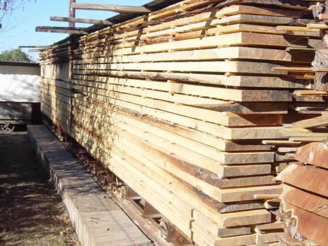 loblolly+pine+from+bastrop+fire27.jpg