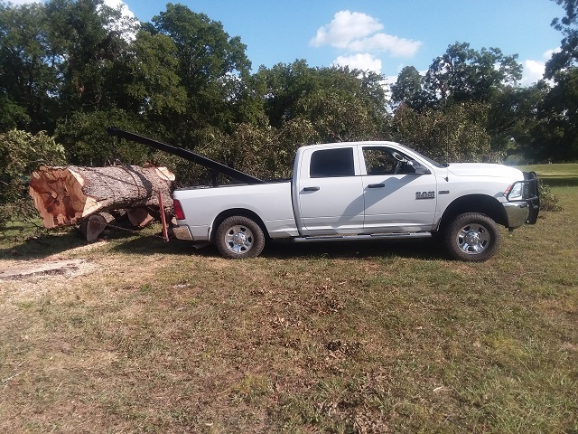pecan, new Dodge_170438