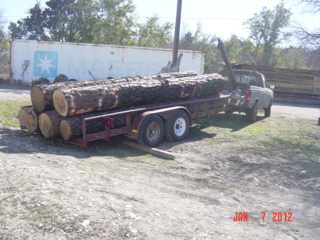 loblolly+pine+from+bastrop+fire+82.jpg
