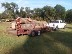 pecan, new Dodge_182022