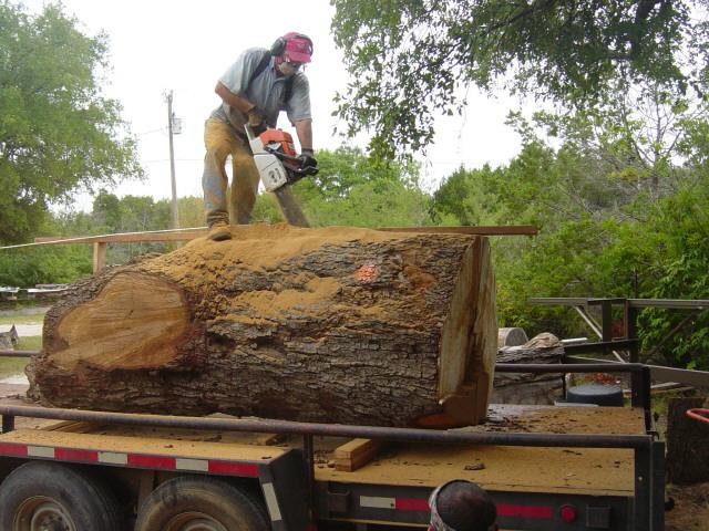 live oak 3032.jpg