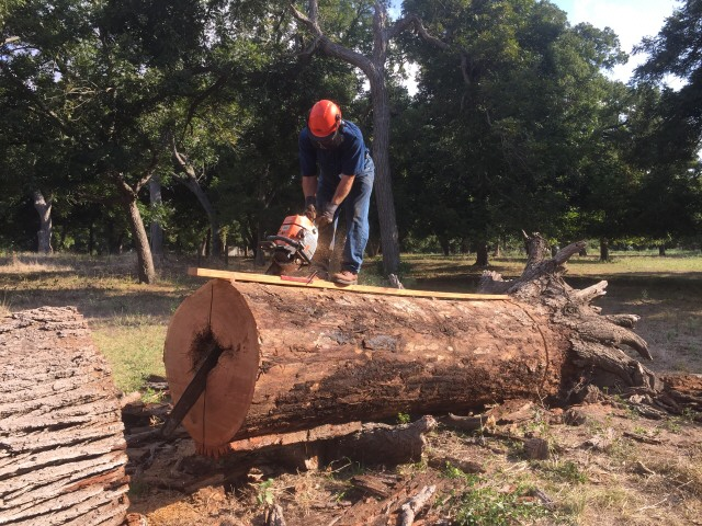 Bur oak log 50 inch 2890