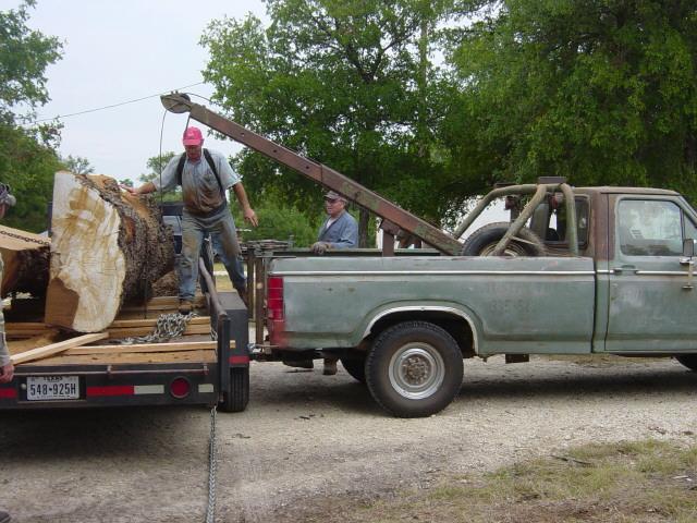 live oak 3061.jpg
