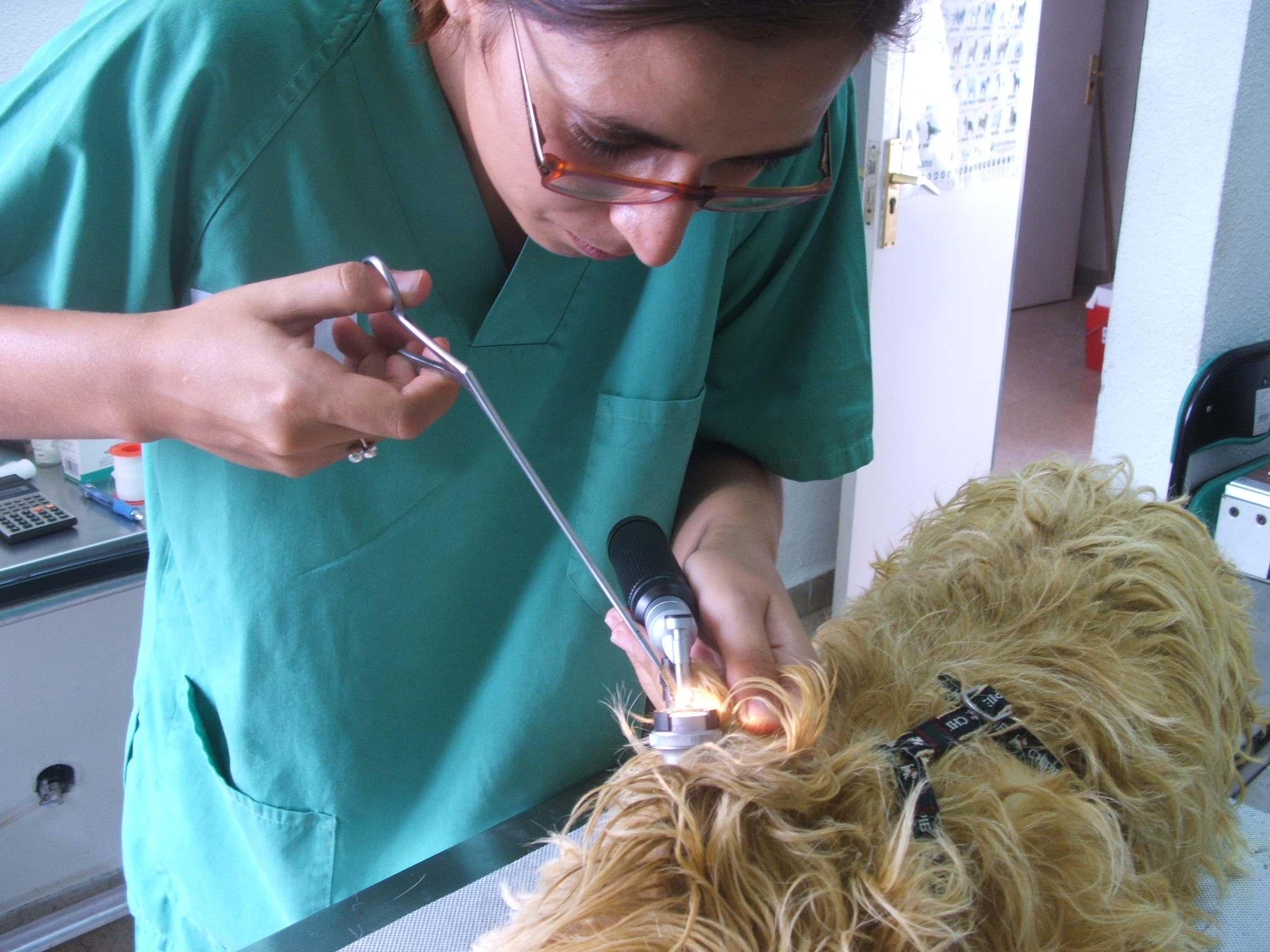 Hospital Veterinario Cantabria