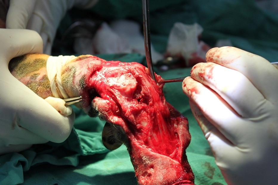 SOLVET artrodesis