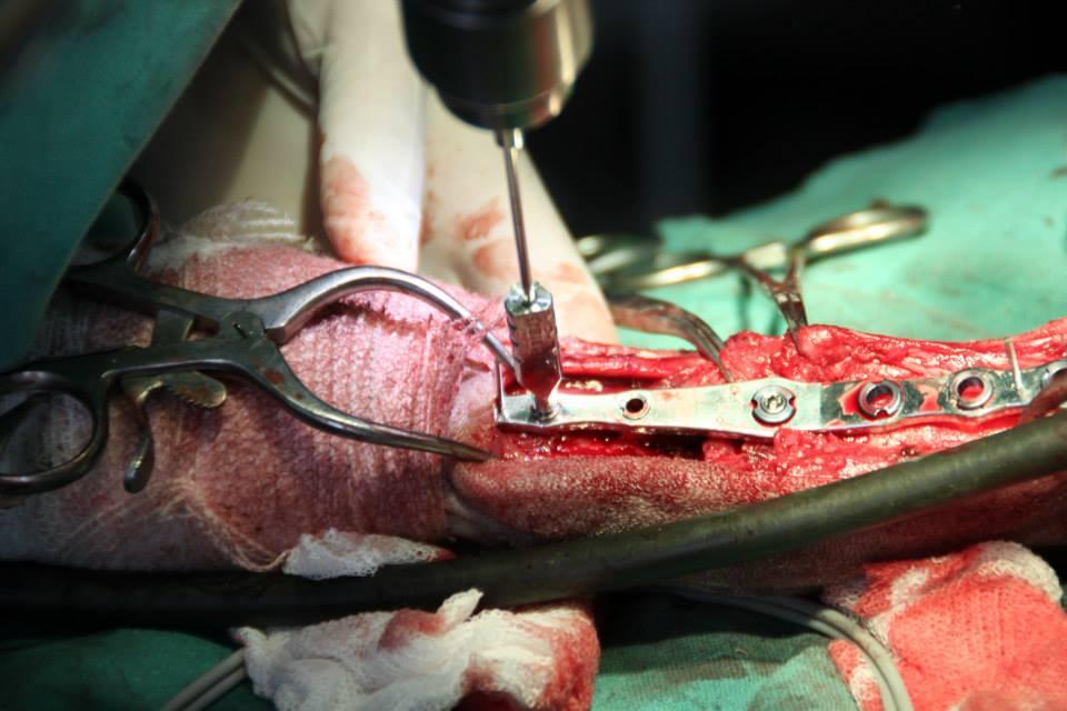 Artrodesis pancarpal