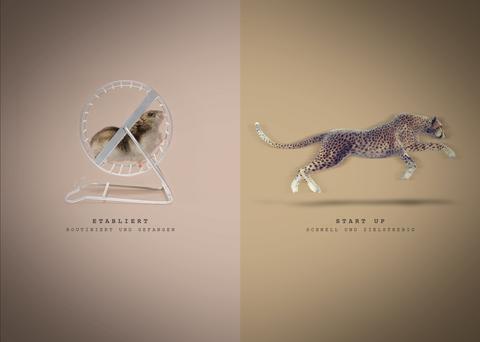 Vergleich_Hamster-Gepard