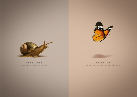 Vergleich_Schnecke-Schmetterling