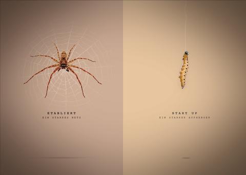 Vergleich_Spinne-Raupe