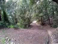 Foresta Baccu Arrodas, Muravera