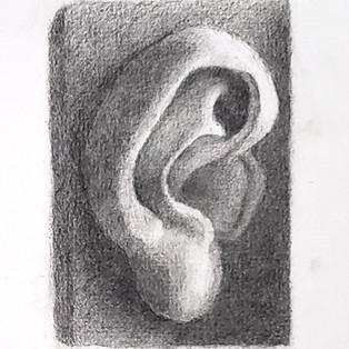 Ear cast drawing study