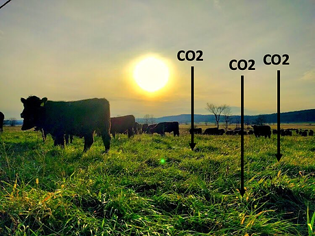 Carbon Offsets_Cows.png