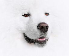 dog_image.jpg
