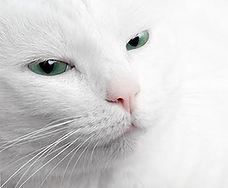 cat_image.jpg