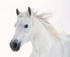 horse_image.jpg