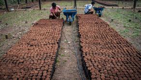 Enchimento das sacolinhas para plantio de mudas para o Projeto de Reflorestamento Pamine - Renascer