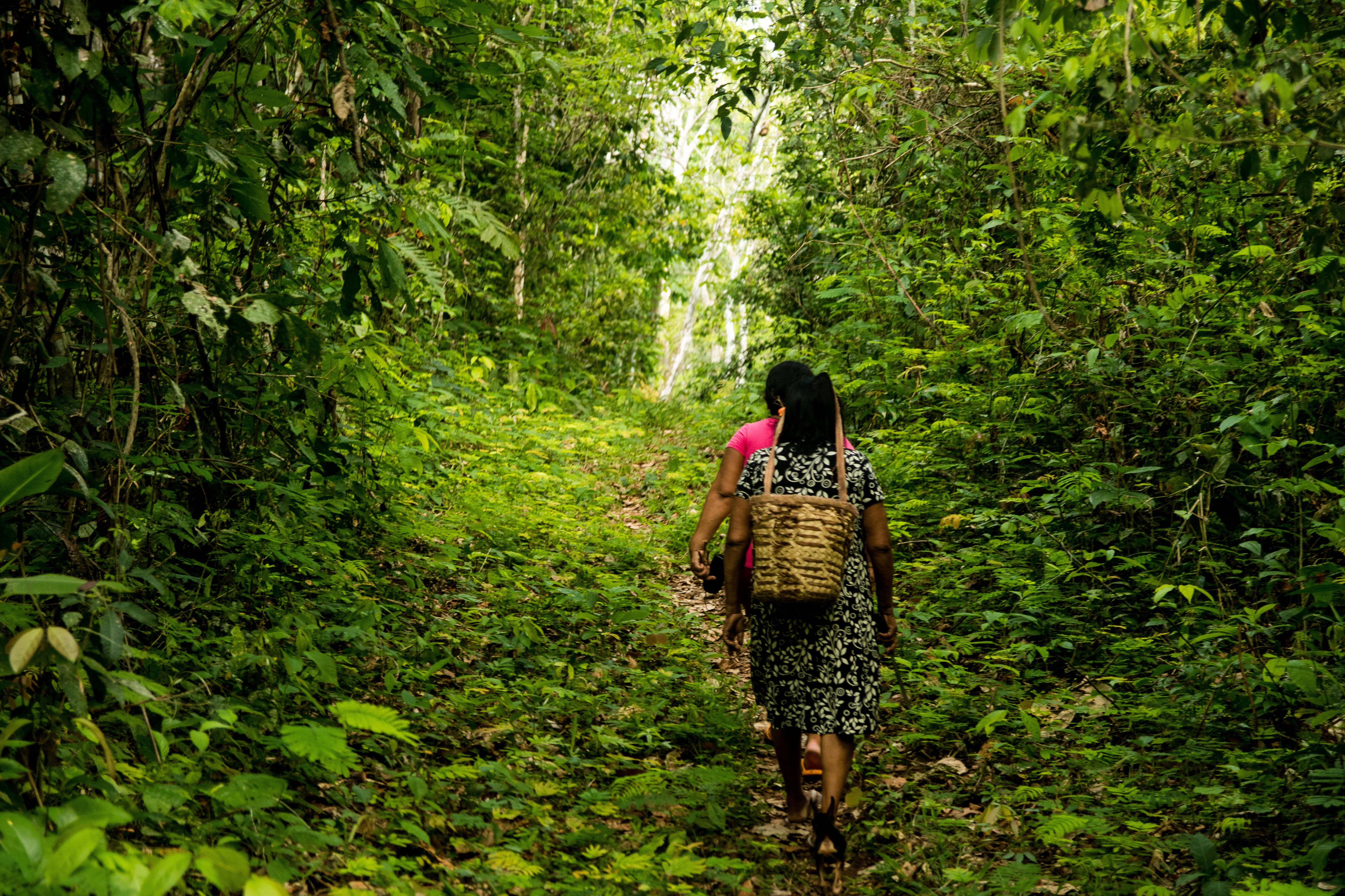 paiter surui na floresta