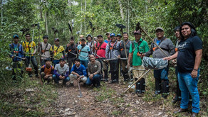 Limpeza das áreas de reflorestamento PAMINE