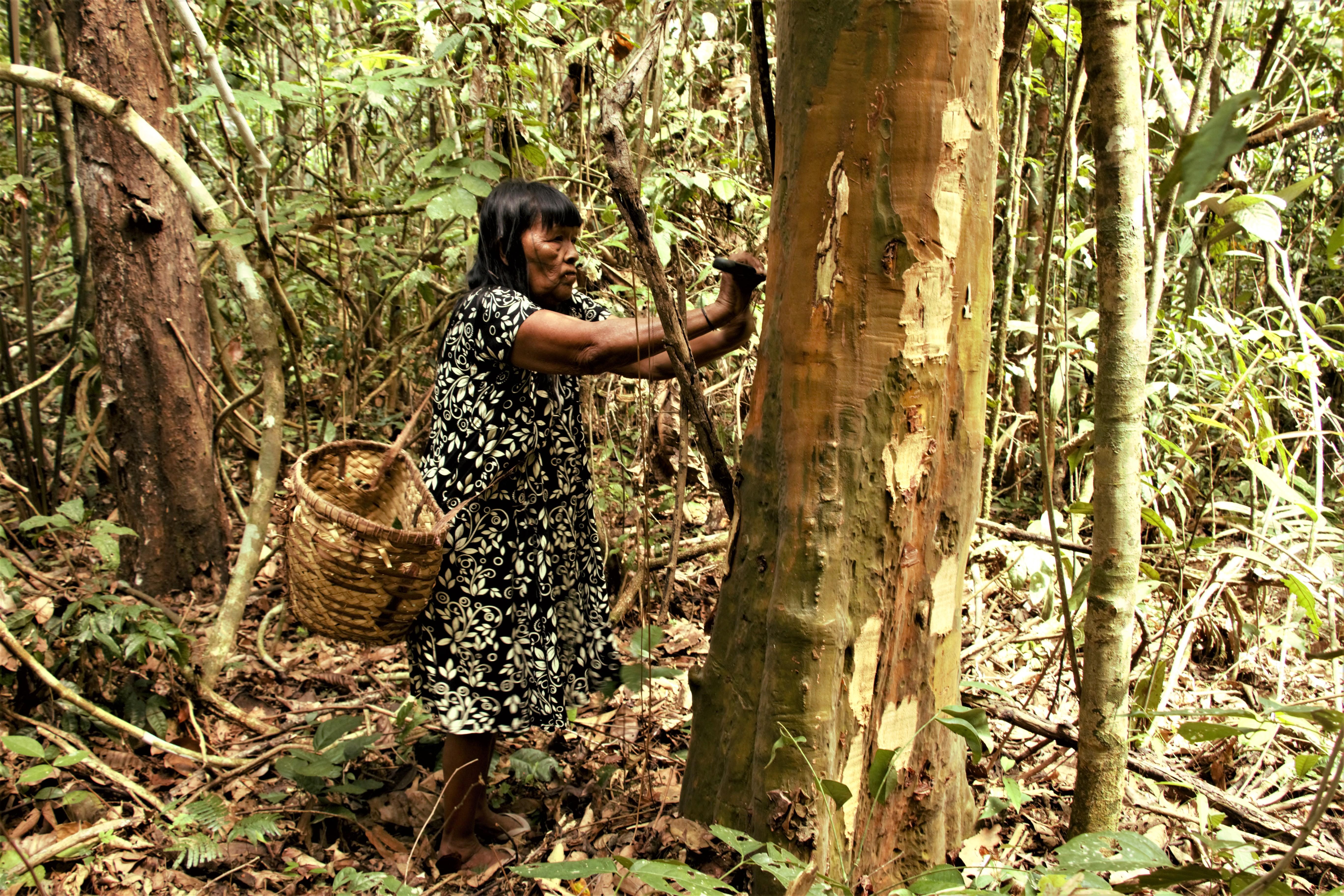 medicina da floresta