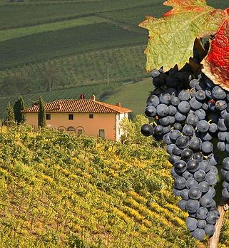 Vineyeard-in-Chianti-Tuscany-Italy-famou