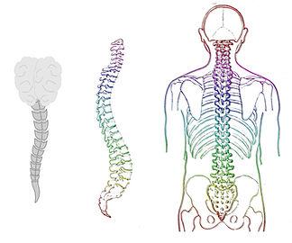 Dolor cervical o de cuello y rigidez de hombros