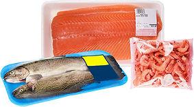 Fisch_1000px.jpg