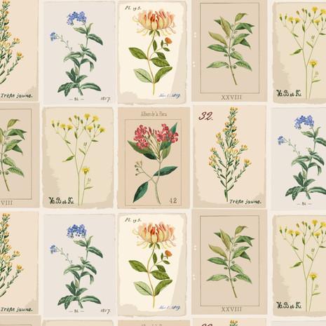 thumbnail_botanic pages.jpg