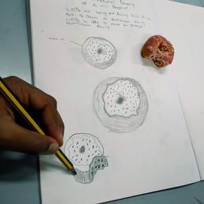 Mini Doughnut Challenge