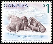 atlantic-walrus-canada-stamp.jpg