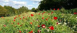 mccwinterhillwildflowers.jpg