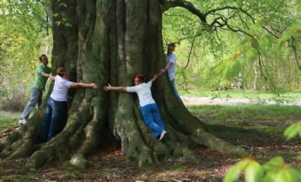 Wild Cookham veteran trees.png
