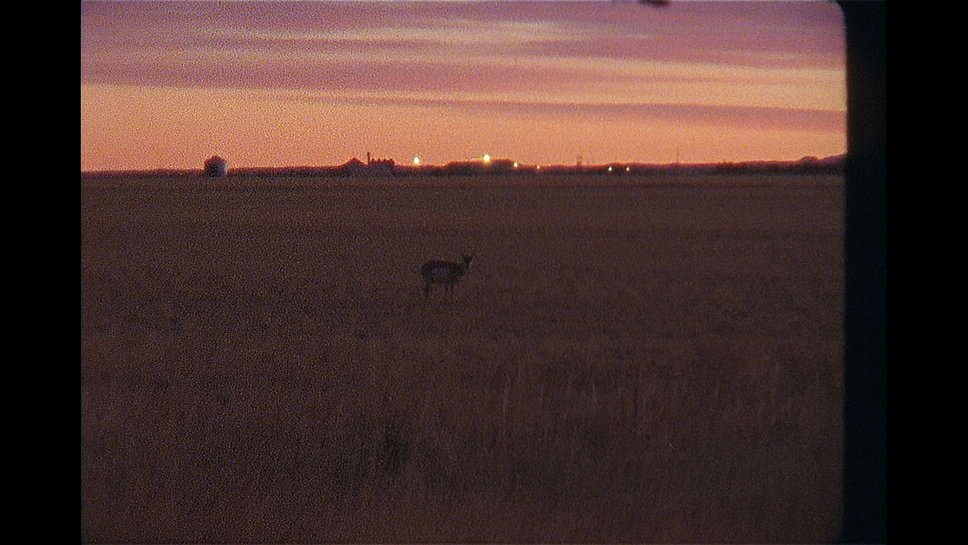 Lonely antelope.jpg