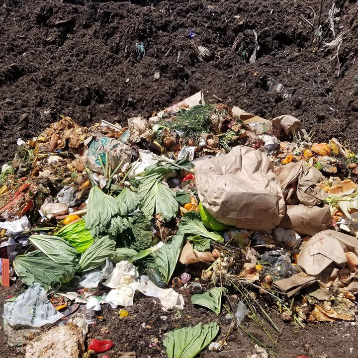 Composting Guide for Colorado - What can I compost?