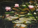 Nicol & Laci's Pond