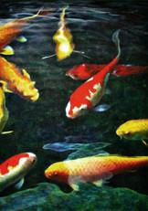 Sarah's Fish 2