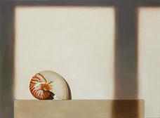 Nautilus on Canvas
