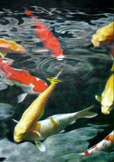 Sarah's Fish 1