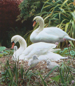 The Forresters Swans