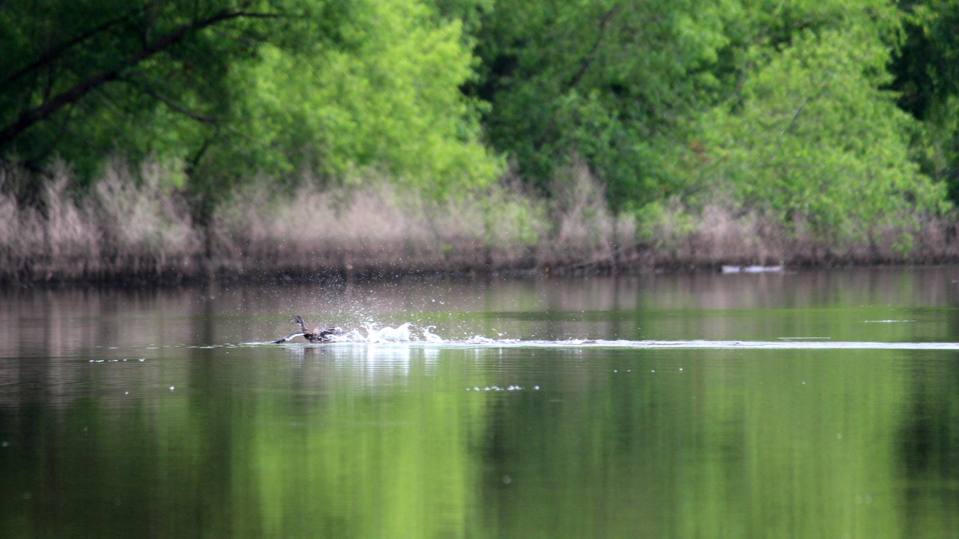 June 12, 2018 - Scouting Tour of Smith's Mill Section Photos by: Mill Pond Kayak