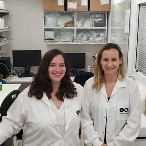 Ces chercheurs ont inventé des plombages antibactériens