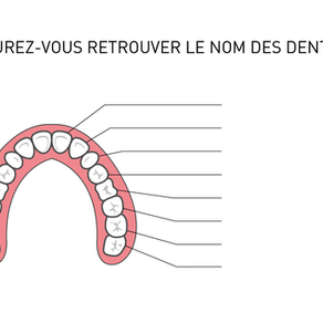 Vos patients sauront-ils retrouver le nom des dents ?