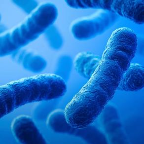Une nouvelle technique d'analyse permet de détecter les bactéries dans un échantillon en 30 minutes