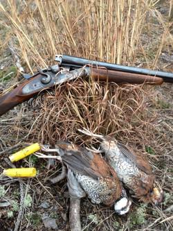 quail and gun.jpg