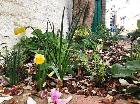 A teeny patch planted up in Notting Hill