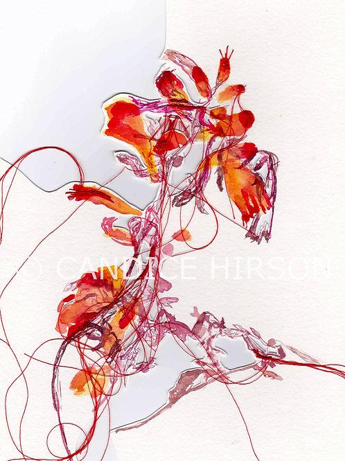 Flower Series 47