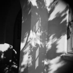 Dappled Sunlight Study #3
