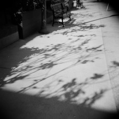 Plant Shadow Study