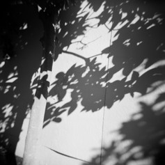 Dappled Sunlight Study #4
