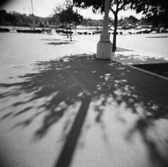 Dappled Sunlight Study #5