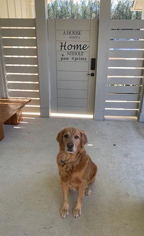 Golden Retriever Luke waiting to meet prospective family